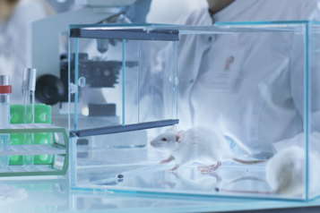 White rats in a glass cage in a research lab